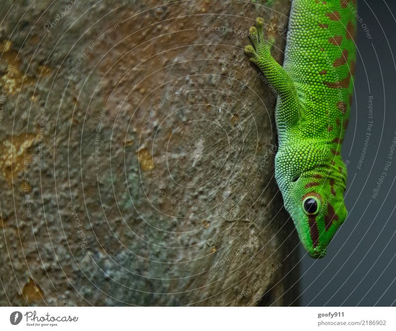 lizard Elegant Environment Nature Spring Summer Plant Tree Forest Virgin forest Animal Wild animal Animal face Scales Claw Paw Saurians Reptile eye 1 Discover