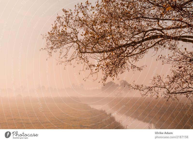 Autumn fog in the Teufelsmoor Nature Landscape Plant Fog Tree Leaf Twig Branch Autumnal Autumnal colours Gold River bank Bog Marsh Calm Grief Loneliness Mystic