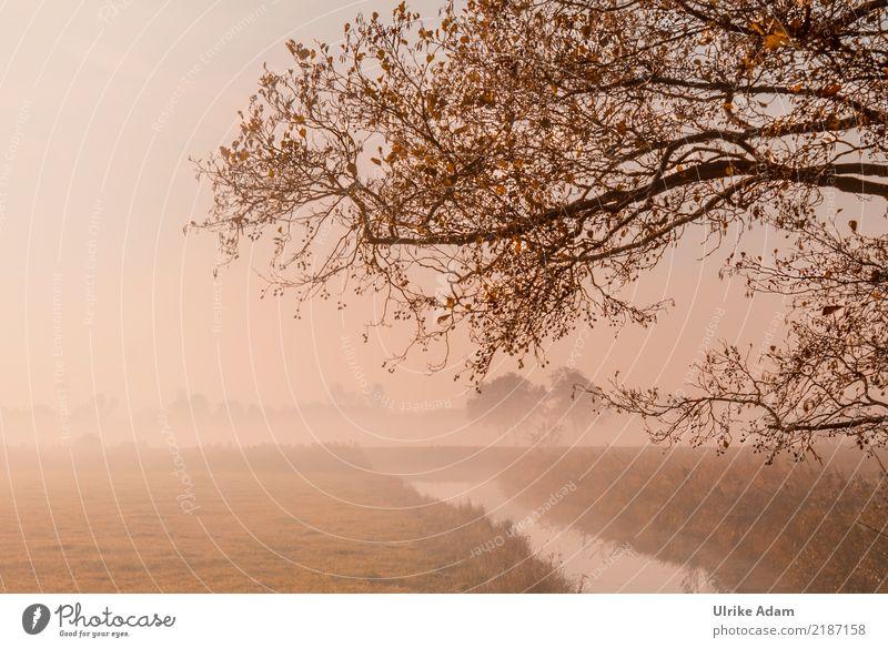 Nature Plant Tree Landscape Loneliness Leaf Calm Autumn Fog Gold Branch Grief Twig River bank Haze