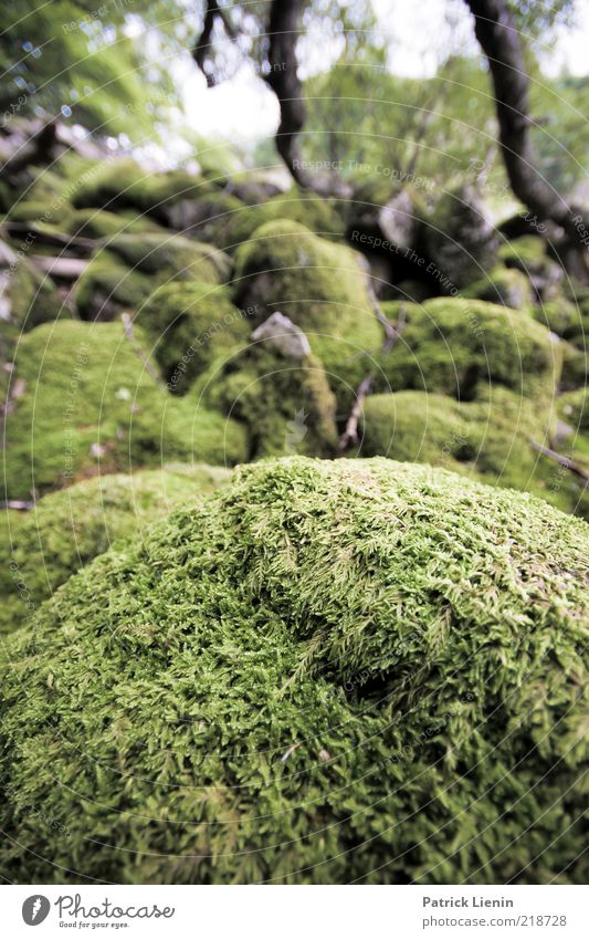 Nature Beautiful Green Plant Summer Forest Stone Landscape Environment Growth Hill Moss Overgrown Natural growth Carpet of moss
