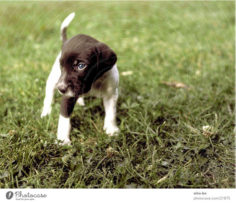look_yet_skeptically Dog Animal Puppy Pet