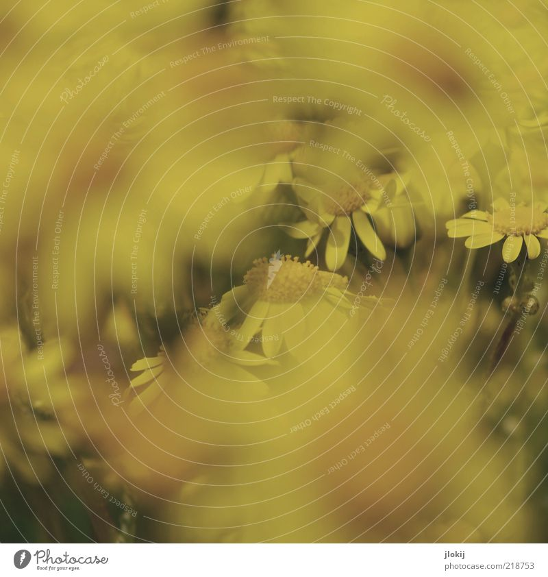 through the flower... Environment Nature Plant Spring Summer Flower Blossom Foliage plant Wild plant Esthetic Near Retro Yellow Calm Growth Subdued colour