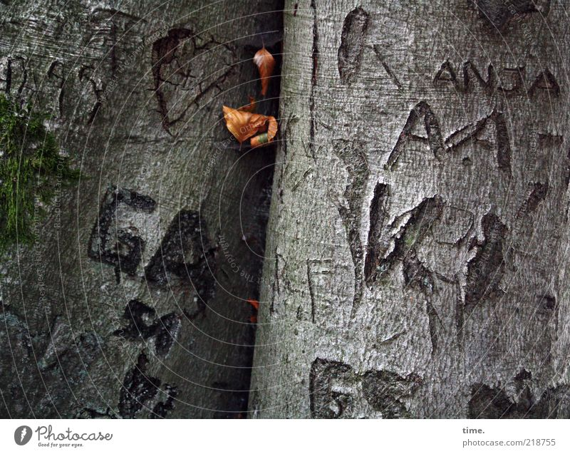 Tattooed Trees scratched names Letters (alphabet) Nature Environment Exterior shot Twilight Deserted Detail Leaf Plant Joke hands Tree bark Gray Green