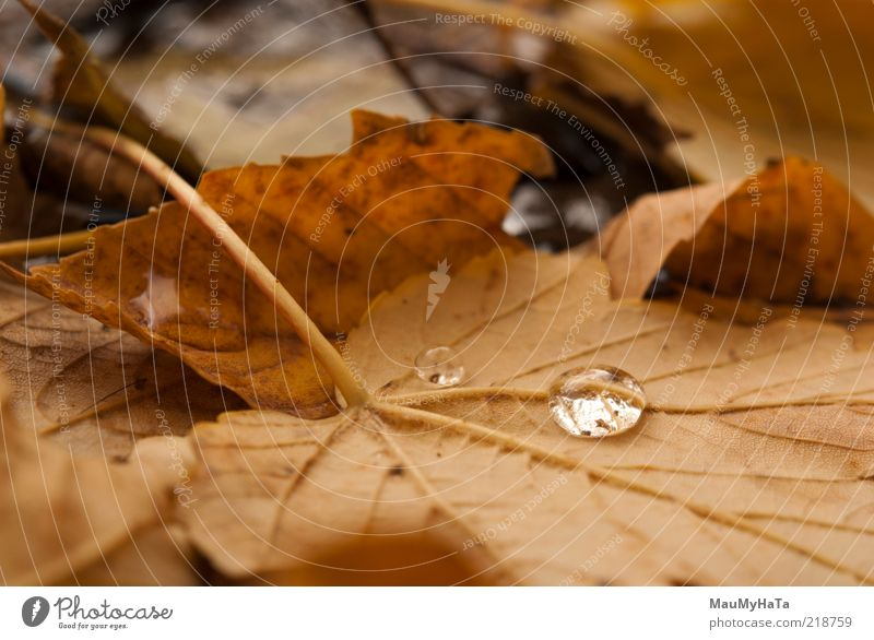 autumn leaves Nature Old Water White Tree Plant Leaf Clouds Yellow Autumn Park Brown Rain Gold Climate Exceptional
