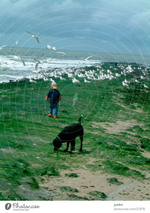 Child and dog watching seagulls Seagull Dog Search Ocean Netherlands Man Observe Water Sky North Sea