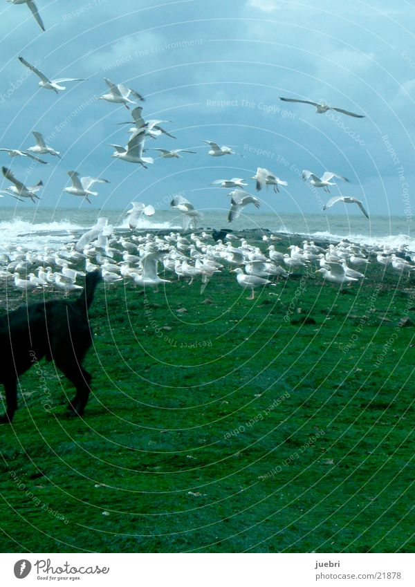 Seagulls and dog Dog Scare North Sea Sky Water