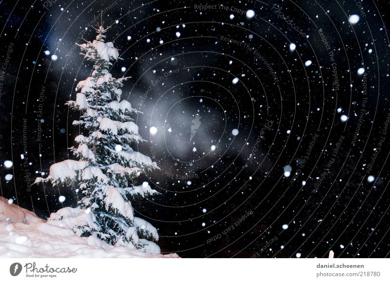 ...trickles quietly ... Vacation & Travel Winter Snow Winter vacation Nature Climate Ice Frost Snowfall Black White Fir tree Night Flash photo Light Deserted