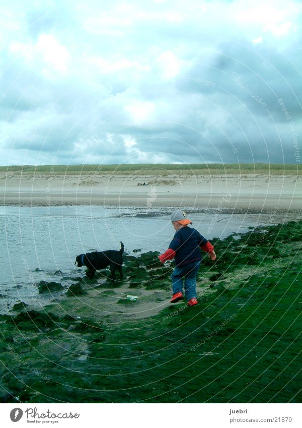 Child with dog at the North Sea Dog Search Netherlands Beach Ocean Man Water