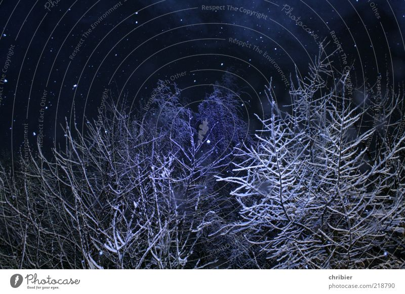 Winter christmas wonder forest Snow Winter vacation Nature Ice Frost Snowfall Tree Forest To fall Glittering Beautiful Blue White Anticipation Calm Uniqueness