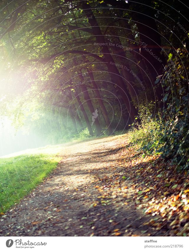 because it's so beautiful ... Environment Nature Plant Sunlight Autumn Beautiful weather Tree Grass Bushes Forest Relaxation To go for a walk Promenade