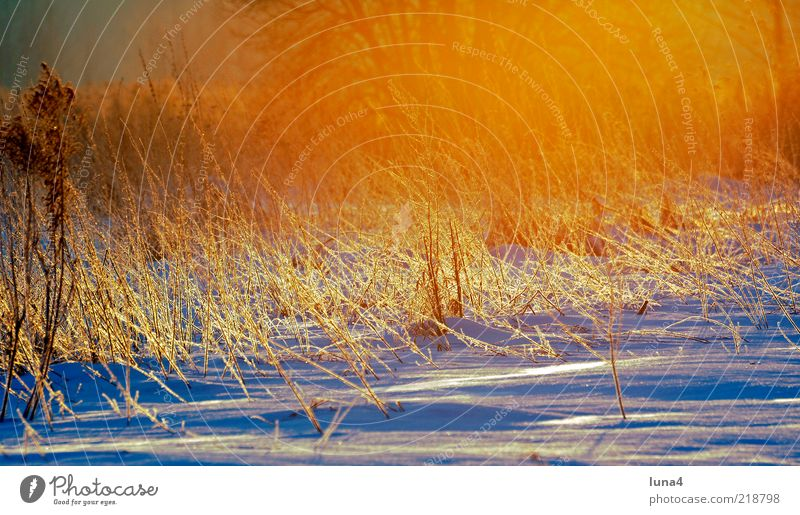 winter morning Winter Snow Environment Nature Landscape Sunrise Sunset Sunlight Weather Ice Frost Grass Bushes Field Cold Yellow Gold Bizarre Hoar frost