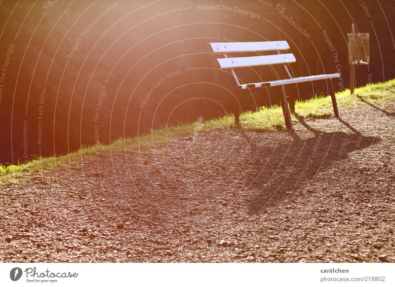 Green Calm Relaxation Autumn Lanes & trails Park Brown Break Bench Trash container Detail Park bench Wayside Restorative