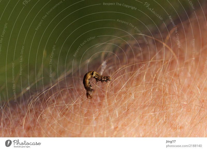 Summer Animal Wild Wild animal Crawl Caterpillar Worm