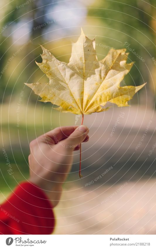 #AS# autumn yellow Art Esthetic Maple leaf Autumn Autumnal Autumn leaves Autumnal colours Early fall Autumnal weather Autumn wind Yellow Colour photo