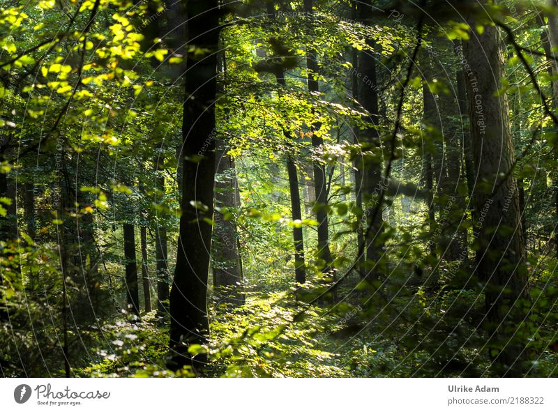 in the wood Harmonious Well-being Contentment Relaxation Calm Meditation Trip Adventure To go for a walk Forest walk Decoration Wallpaper Nature Landscape Plant