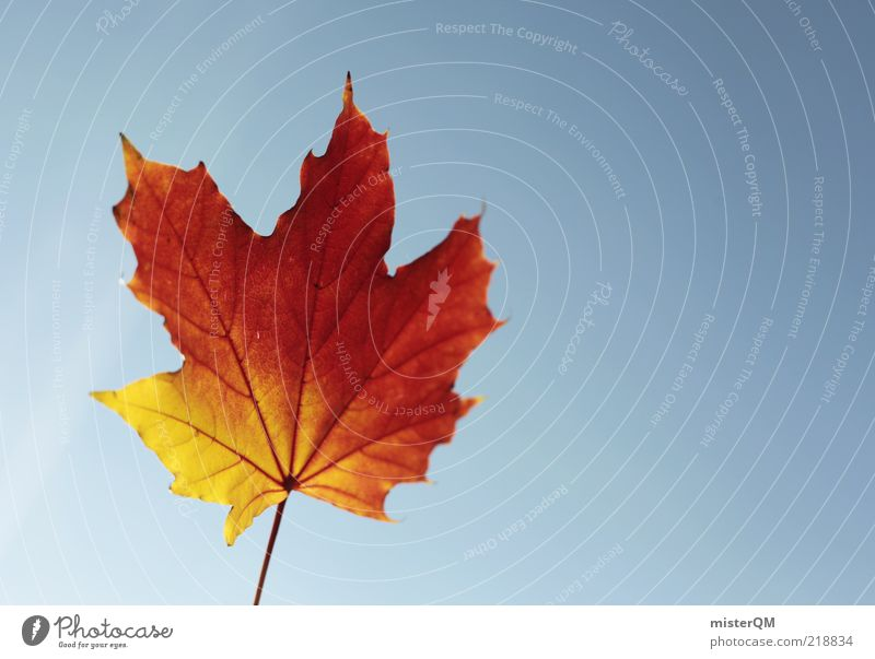 Nature Beautiful Red Calm Leaf Yellow Autumn Wind Weather Esthetic Change Transience Stalk Beautiful weather Blow