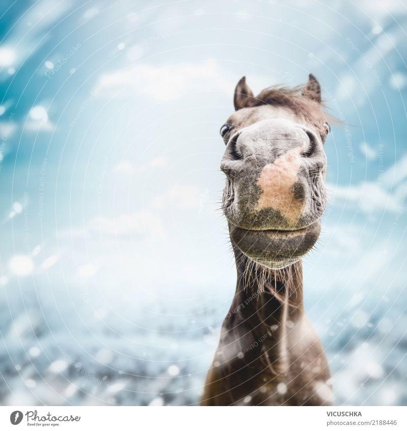 Nature Animal Joy Winter Lifestyle Snow Moody Snowfall Joie de vivre (Vitality) Horse Gale Humor Grinning