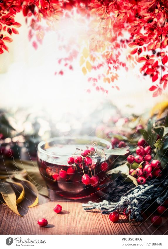 Nature Plant Tree Leaf Life Warmth Lifestyle Autumn Emotions Style Garden Moody Design Table Beautiful weather Beverage