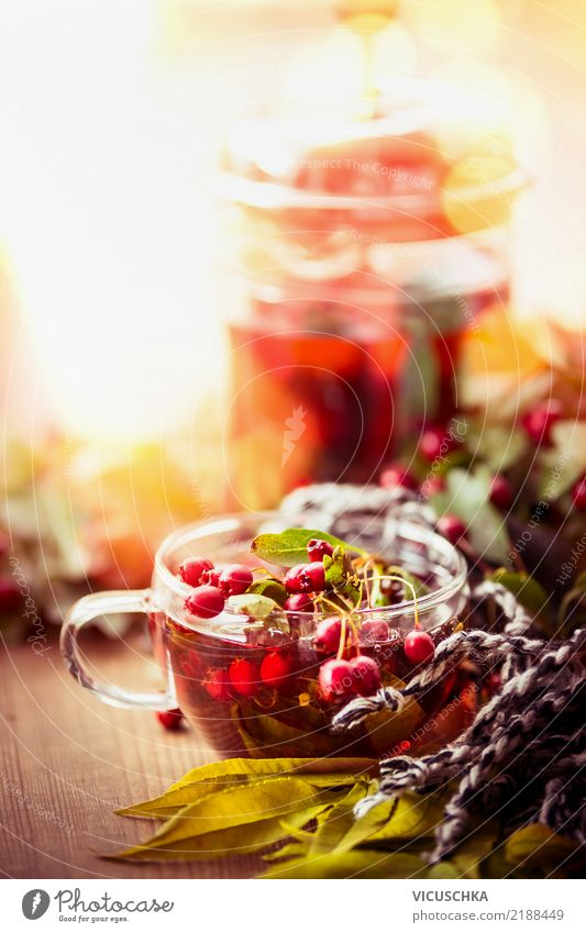 Autumn day with cup of tea Beverage Hot drink Tea Style Design Healthy Eating Life Living or residing Nature Leaf Garden Emotions Background picture Cup