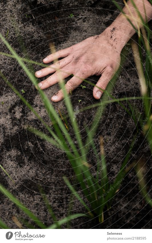 touch ground Leisure and hobbies Gardening Hand Fingers Environment Nature Grass Earth Park Meadow Dirty Dark Natural Colour photo Exterior shot Detail
