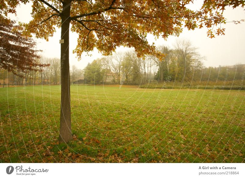In the fog park Environment Nature Landscape Autumn Bad weather Fog Tree Grass Park Dream Authentic Dark Cold Brown Green Idyll Leaf Deciduous tree