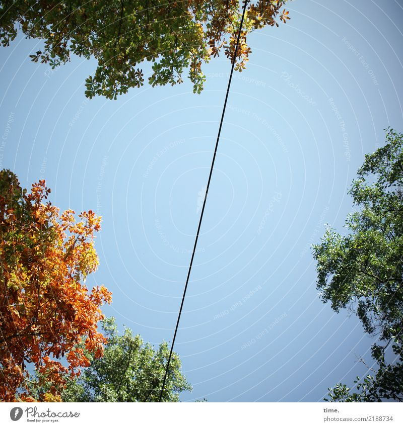 Nature Tree Leaf Life Autumn Movement Modern Energy industry Power Perspective Beautiful weather Tall Discover Logistics Cable