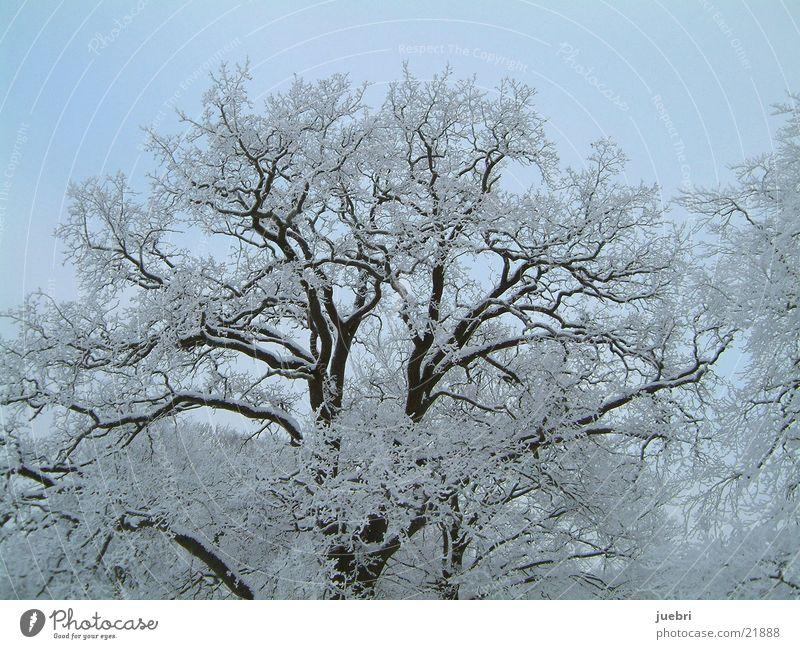 Ice tree horizontal Tree Horizontal Snow Graffiti