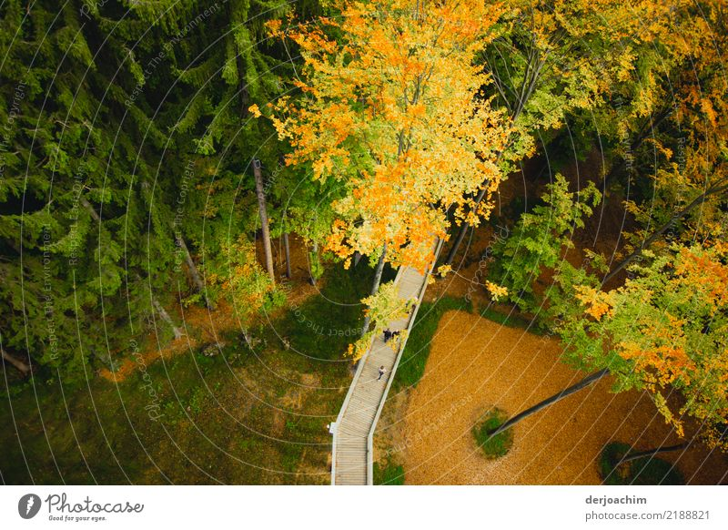 From above there is a view of a raised wooden walkway leading through the forest. Joy Relaxation Trip Environment Nature Autumn Beautiful weather Tree Forest