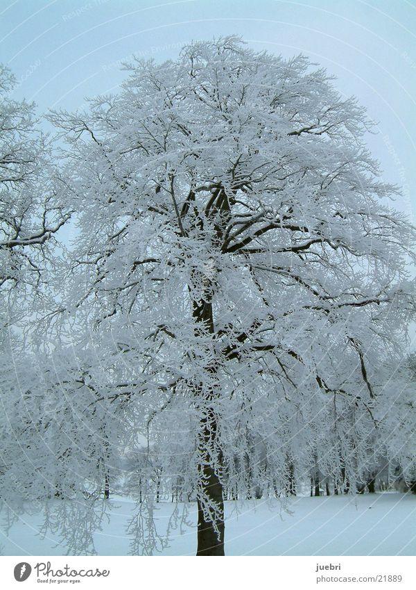 iced tree vertical Tree Vertical Snow Ice Graffiti