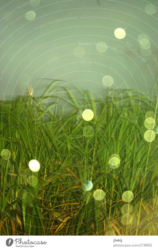 Sky Nature Water Green Blue Plant Grass Gray Rain Wet Drops of water Light Bad weather Motion blur Foliage plant