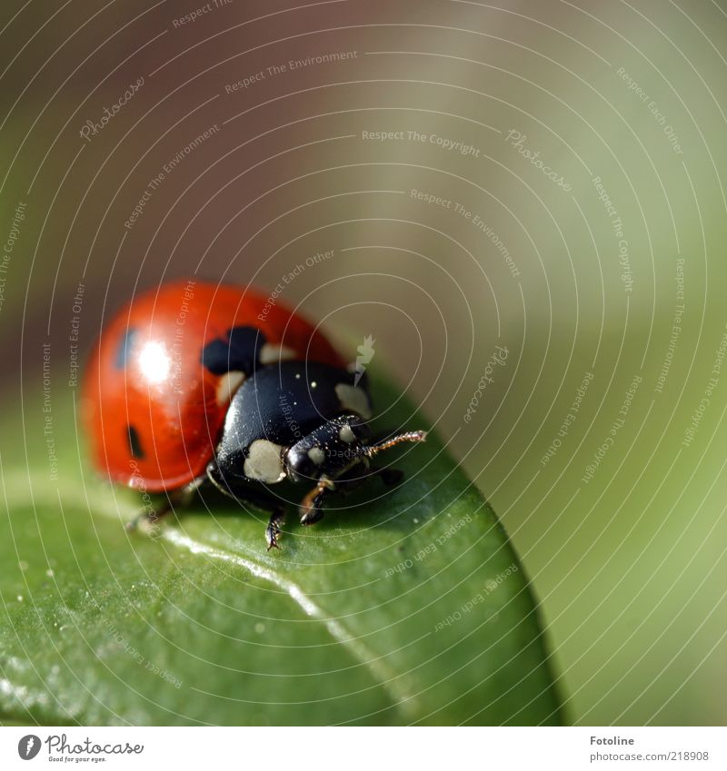 Nature White Green Plant Red Leaf Black Eyes Animal Bright Environment Wing Insect Natural Wild animal Beetle
