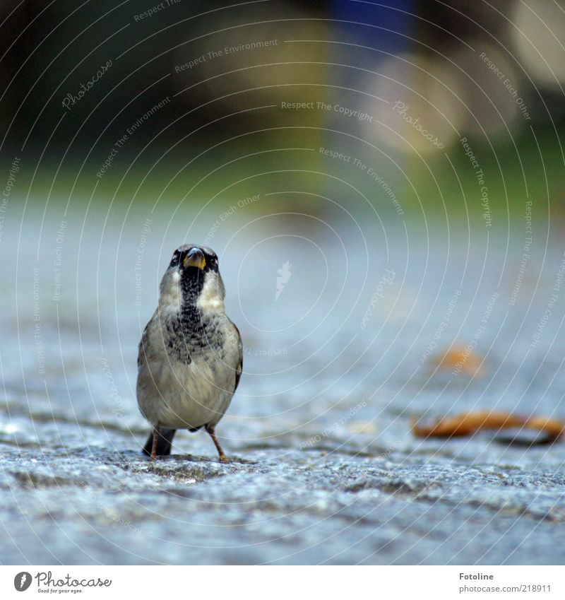 Do you have a crumb of bread or a waffle? Environment Nature Animal Wild animal Bird Animal face Small Natural Cute Feather Sparrow Beak Colour photo