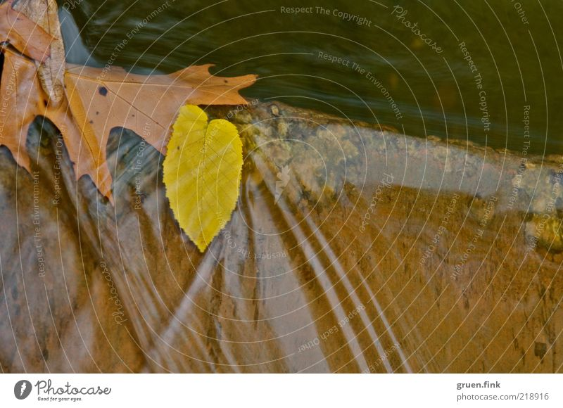 Nature Water Plant Calm Leaf Yellow Autumn Movement Stone Brown Waves Elegant Esthetic River Fluid Flow
