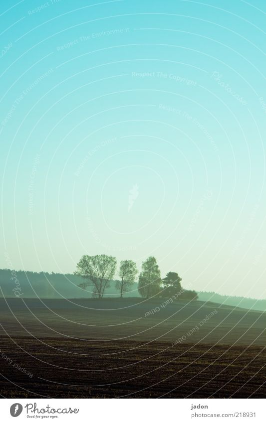 Early in the morning Far-off places Freedom Landscape Earth Cloudless sky Autumn Fog Tree Field Forest Hill Calm Moody Clump of trees Morning fog Agriculture