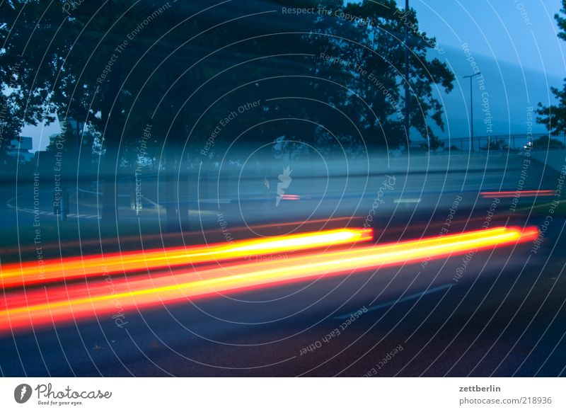 tempo Means of transport Traffic infrastructure Motoring Street Driving Speed Dynamics Tracer path Floodlight Tree Avenue Blur Colour photo Exterior shot
