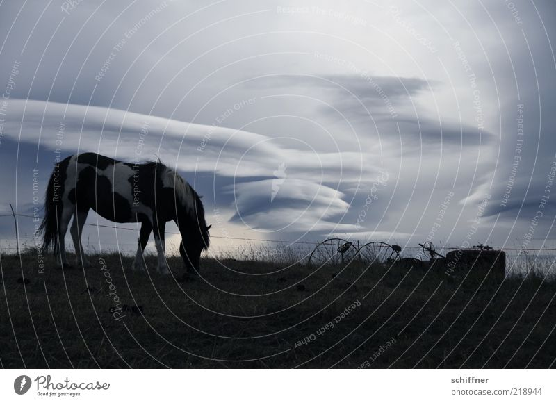 Calm Clouds Loneliness Animal Dark Cold Moody Horse Esthetic Soft Longing Iceland To feed Wanderlust Pet Bad weather