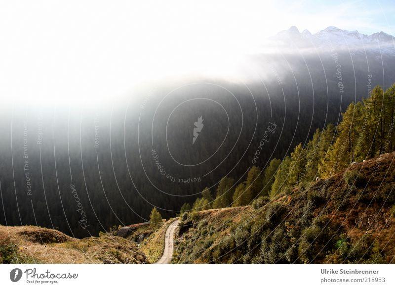Tree Street Forest Autumn Mountain Warmth Fog Vantage point Italy Alps Fir tree Peak Valley Haze Slope Steep