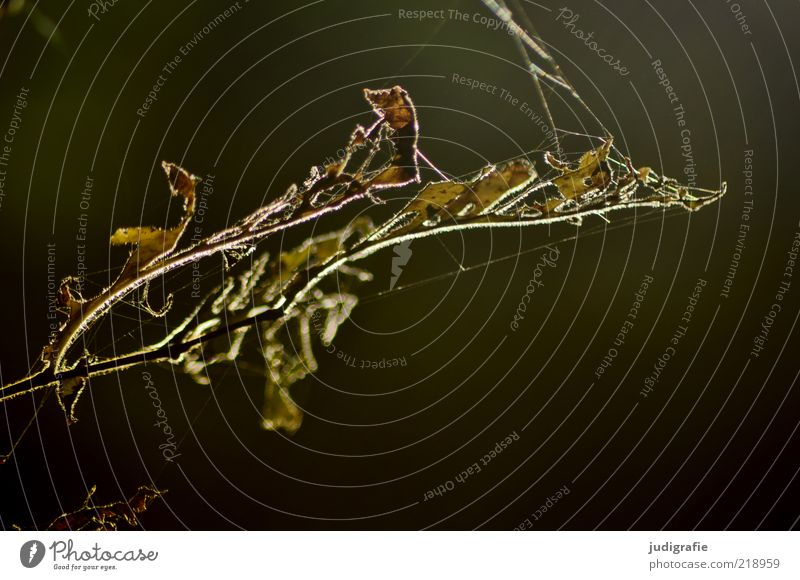 Nature Plant Leaf Life Dark Autumn Death Moody Environment Transience Natural Dry Spider's web