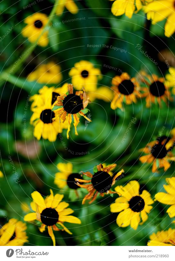 Last flowers of the summer Plant Flower Blossom Faded Brown Yellow Green Black Decline Transience Colour photo Multicoloured Exterior shot Blur
