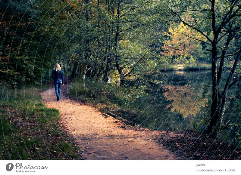 Human being Woman Nature Green Tree Loneliness Calm Adults Relaxation Forest Landscape Yellow Autumn Lanes & trails Park Going