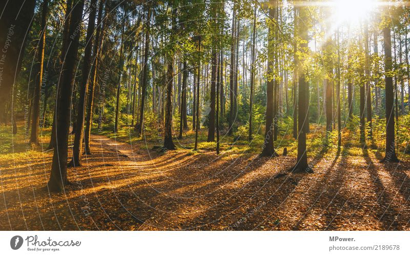 autumn forest Environment Nature Landscape Autumn Beautiful weather Tree Forest Moody Footpath Leaf Deciduous forest Lens flare Mixed forest Colour palette
