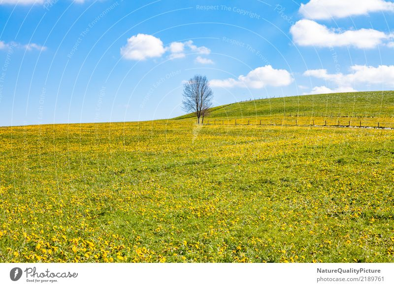 spring meadow Life Tourism Adventure Freedom Summer Mountain Family & Relations Nature Diet Blossoming Relaxation Fitness To enjoy Vacation & Travel Jump