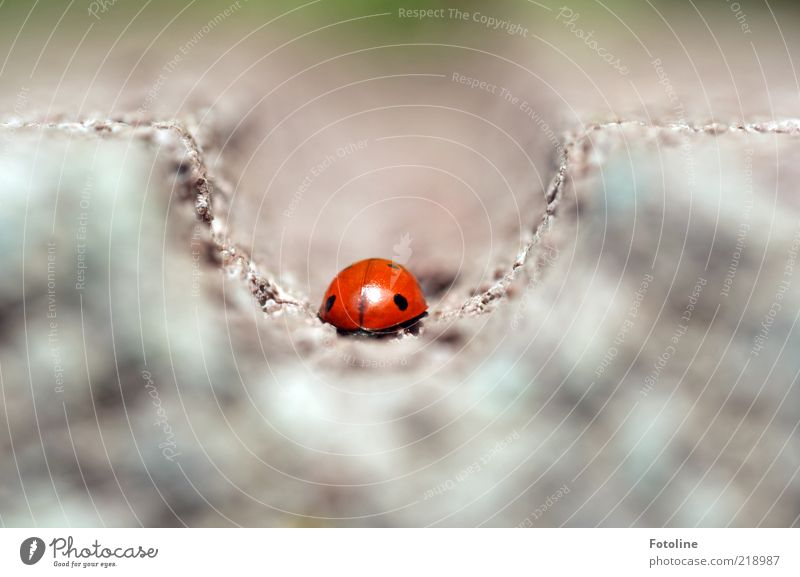 Nature Red Black Animal Bright Small Environment Insect Natural Wild animal Beetle Ladybird