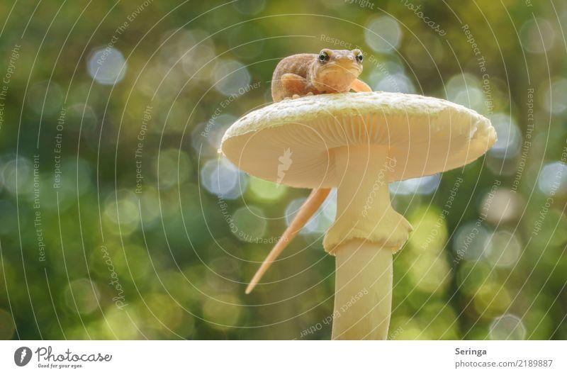 Nature Plant Summer Animal Forest Autumn Spring Wild animal Observe Mushroom Animal face Newt