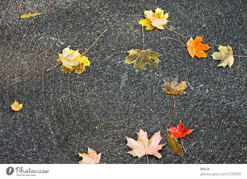 Human being Red Leaf Yellow Street Dark Autumn Gray Lanes & trails Wind Gold Gloomy Ground Lie Asphalt To fall