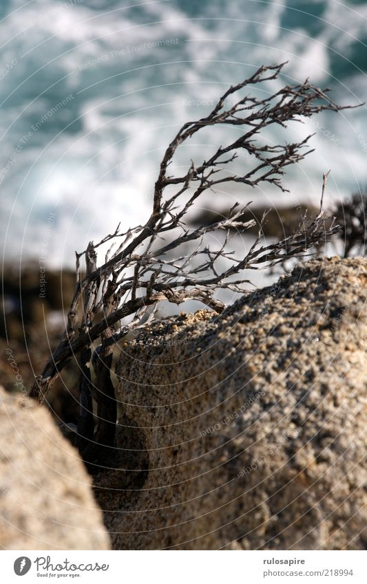 Nature Water Plant Landscape Air Coast Waves Wind Rock Bushes Gale Dry Column Shriveled Thorny Cliff