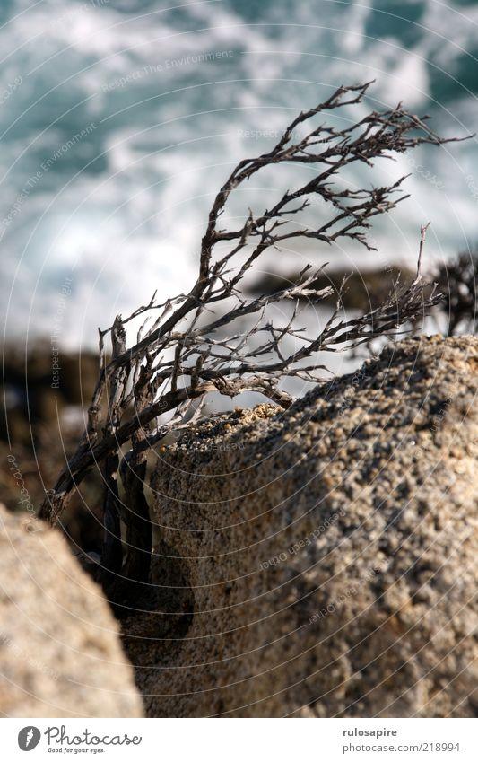 wind & sea Nature Landscape Plant Air Water Wind Gale Bushes Waves Coast Thorny Dry Shriveled Column Rock Cervice Rocky coastline Cliff Colour photo