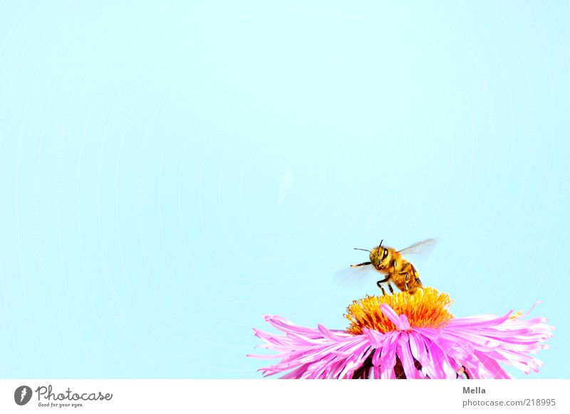 Nature Sky Flower Blue Plant Animal Blossom Movement Small Pink Environment Violet Wing Natural Bee Fragrance
