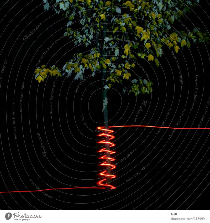 Tree Plant Red Crazy New Exceptional Tree trunk Bizarre Contrast Hip & trendy Spiral Low-key Illumination Maple tree Fairy lights