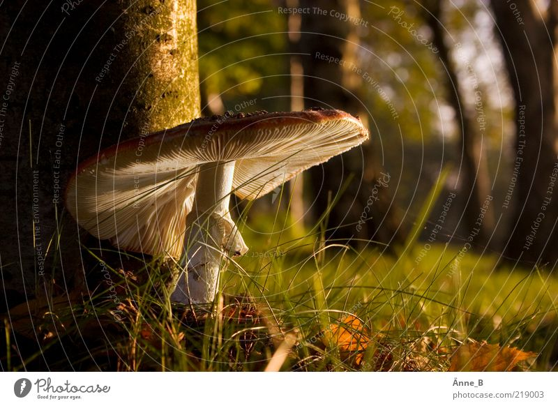 Nature Green White Summer Calm Autumn Environment Grass Brown Growth Beautiful weather Mushroom Woodground Lamella Mushroom cap Sunlight
